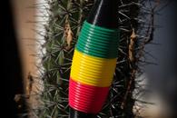 Carousel thumb guirocactus