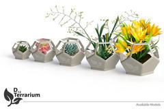 D12 Terrarium All Models