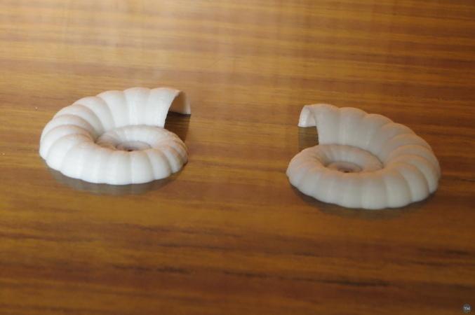 Conchas y formas relacionadas