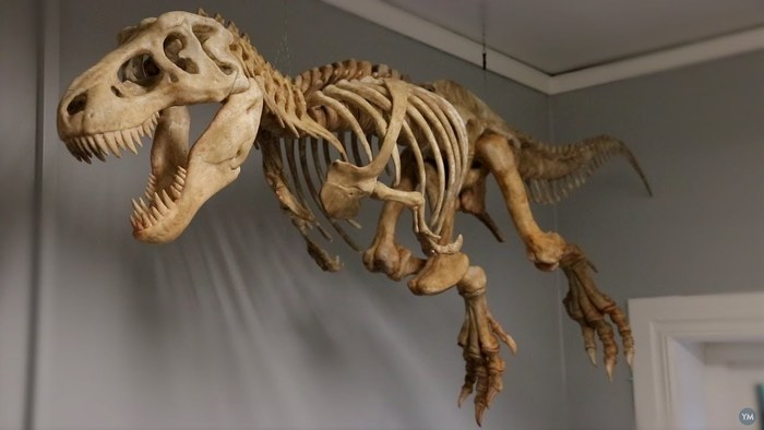 Half-size T-Rex for your home