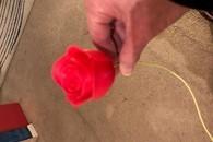 Carousel thumb rose