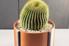 Copper Circle W Plant