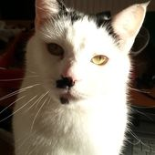Span2 cat
