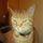 Mini bad cat avatar