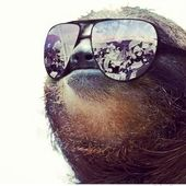 Span2 sloth