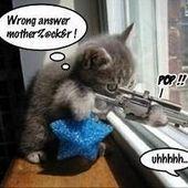 Span2 sniper cat