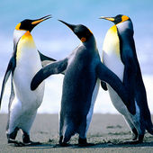 Span2 penguins