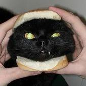 Span2 catburger  2
